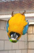 Ararauna ara blue yellow macaw animal animals Stock Photos