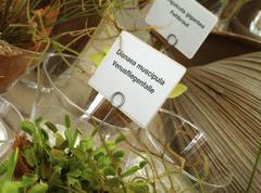 Dionaea muscipula venus flytrap adaptation Stock Photos