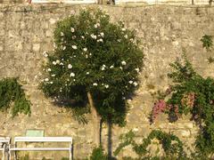 Korcula croatia horizontal format island depict Stock Photos