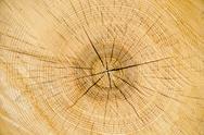 Oak log detail Stock Photos