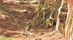 Burkina Faso: Hard Soil Stock Footage