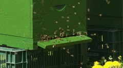 Beehives in orchard - close up Stock Footage