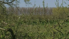 Cyclists over river dike behind branches apple tree. Stock Footage