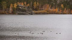 Ducks float on the lake. An autumn background Stock Footage