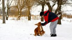 Boy and his dog play in winter, English Cocker Spaniel Stock Footage