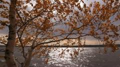 Yellow Birch Lake Wind Stock Footage