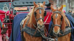 Tourist attraction chariot in Berlin Stock Footage