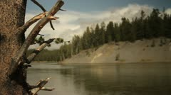 Leafless tree and river in Yellowstone National Park - stock footage