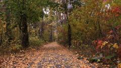 Autumn leaf fall. - stock footage