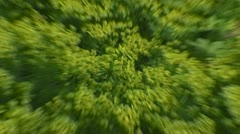 Zoom in + close up - Euphorbia cyparissias, Cypress Spurge Stock Footage