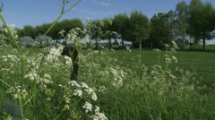 Anthriscus sylvestris, Cow Parsley in wind - river landscape - wide shot + pan Stock Footage