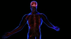 Lymphatic System - stock footage