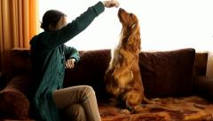 Young girl trains her dog, English Cocker Spaniel, feeding, playing Stock Footage