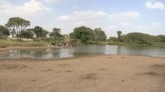 Burkina Faso: African Pond in a Dry Land Stock Footage