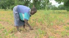 Burkina Faso: Hard Ground Garden Stock Footage
