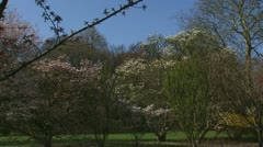 Pan botanical garden + hold white cherry blossom tree Stock Footage