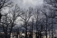 Leafless trees silhouetted in winter Stock Photos