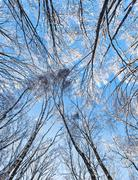 Crown of a trees covered with hoar frost in winter forest, overhead view Stock Photos