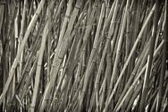 Slanty bamboo Stock Photos