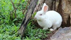 Rabbit in the farm Stock Footage