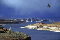 Dino fantasy saurian dinosaur north america Stock Photos