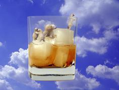 Party icebears in whisky glass composing polar Stock Photos