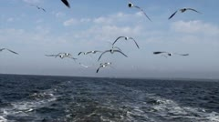 seagulls behind boat - stock footage