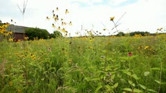 WILDFLOWER FIELD - DOOR COUNTY, WISCONSIN Stock Footage
