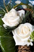 Flower nature bunch bouquet plant botany bloom Stock Photos