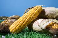 Food maize corn harvest crop autumn fall grain Stock Photos