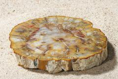 Stock Photo of petrified wood stone coloured colored colourful