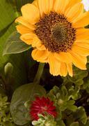 Kukka kesällä art lehti kuvitus kaunis alkuunsa bed Kuvituskuvat