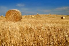 bale straw field farming agronomics agronomy - stock photo