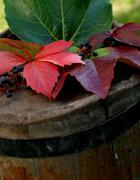 food wine leaf autumn color vine leafs drink - stock photo