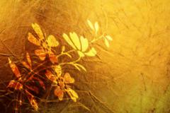 Background brown brush canvas flower gold leaf Stock Photos