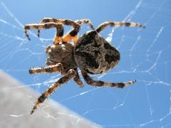 Food hunger net spider web ugly young in ist Stock Photos