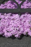 Flower botany closeup garden gardener green park Stock Photos