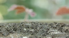 Black ant Stock Footage