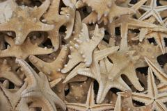 Stock Photo of water design texture mollusc starfish structure