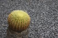 Stock Photo of cactus fundacÌon cÈsar manrique garden arid