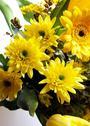 Blooming bouquet closeup detail fragile natural Stock Photos