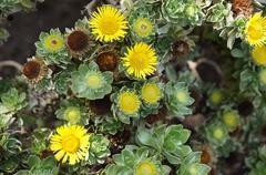 Yellow flowering plants Stock Photos