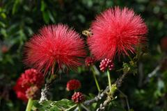 Flower tree food sport ball bee blow honey red Stock Photos
