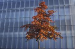 tree art autumn glass fassade mood in front - stock photo