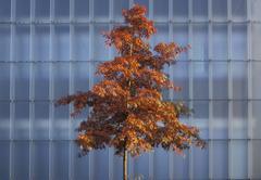 tree art autumn glass fassade in gallery element - stock photo