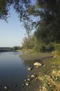 water alluvial forest danube riverside wetlands - stock photo