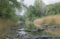 Water alluvial forest danube riverside green Stock Photos