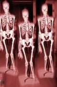 Bone die evil fear ghost health science skeleton Stock Photos