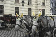 Stock Photo of horse animal draught mammal team district city