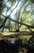 Water tree alluvial forest green au landschaft 2 Stock Photos